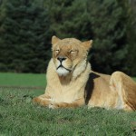 IMG_0549 (Blair Drummond Safari Park!)